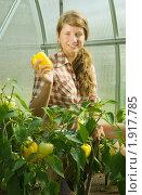 Девушка с урожаем перца. Стоковое фото, фотограф Яков Филимонов / Фотобанк Лори