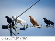 Купить «Группа голубей на телевизионной антенне», фото № 1917961, снято 20 августа 2010 г. (c) Самофалов Владимир Иванович / Фотобанк Лори