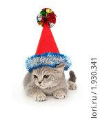Купить «Котенок (британец) в новогоднем колпаке», фото № 1930341, снято 22 августа 2010 г. (c) Юлия Машкова / Фотобанк Лори