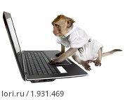 Купить «Обезьяна с ноутбуком», фото № 1931469, снято 10 июля 2010 г. (c) Ирина Кожемякина / Фотобанк Лори