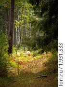 Купить «Таинственное место в лесу», фото № 1931533, снято 24 августа 2010 г. (c) Муратов Андрей Анатольевич / Фотобанк Лори