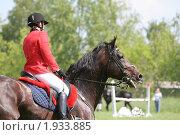 Всадник на гнедой лошади. Стоковое фото, фотограф Светлана Илькова / Фотобанк Лори