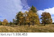 Золотая осень. Стоковое фото, фотограф Жаренов Александр / Фотобанк Лори