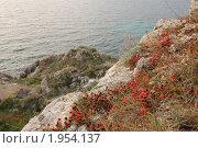 Купить «Эфедра (Ephedra) в крымских горах», фото № 1954137, снято 18 августа 2010 г. (c) Елена Ильина / Фотобанк Лори