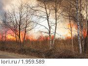 Лесной пожар. Стоковое фото, фотограф Артём Скороделов / Фотобанк Лори