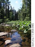 Купить «Летний пейзаж», фото № 1959945, снято 22 июля 2010 г. (c) елена прекрасна / Фотобанк Лори