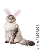 Купить «Кот в костюме кролика», фото № 1969921, снято 22 августа 2010 г. (c) Бутинова Елена / Фотобанк Лори