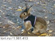 Купить «Кролик в кофточке на земле среди желтых листьев», фото № 1981413, снято 17 сентября 2010 г. (c) Валерия Попова / Фотобанк Лори