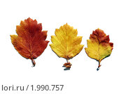 Гербарий. Стоковое фото, фотограф Ольга Долотина / Фотобанк Лори