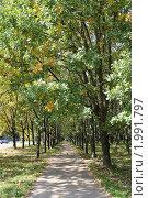 Аллея в парке вначале осени. Стоковое фото, фотограф Tatyana Kubasova / Фотобанк Лори