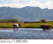 Купить «Горная река», фото № 1995681, снято 17 августа 2010 г. (c) Andrey M / Фотобанк Лори