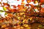 Осенние листья, фото № 2000965, снято 30 марта 2017 г. (c) Светлана Привезенцева / Фотобанк Лори