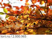 Купить «Осенние листья», фото № 2000965, снято 19 октября 2018 г. (c) Светлана Привезенцева / Фотобанк Лори
