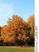 Купить «Осенний парк», фото № 2000981, снято 25 мая 2018 г. (c) Светлана Привезенцева / Фотобанк Лори