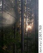 Закат в сосновом бору. Стоковое фото, фотограф Валентин Сурков / Фотобанк Лори