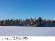 Зимний лес (2009 год). Редакционное фото, фотограф Дарья Фролова / Фотобанк Лори