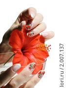 Купить «Женские руки с ярким маникюром и цветок гибискуса на белом фоне», фото № 2007137, снято 25 апреля 2010 г. (c) Татьяна Белова / Фотобанк Лори