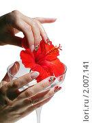 Купить «Женские руки с ярким маникюром и цветок гибискуса на белом фоне», фото № 2007141, снято 28 июля 2010 г. (c) Татьяна Белова / Фотобанк Лори