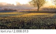 Сельский пейзаж на рассвете. Стоковое фото, фотограф Евгений Ореховский / Фотобанк Лори
