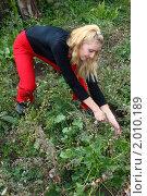 Молодая девушка вырывает траву. Стоковое фото, фотограф Евгений Курлыкин / Фотобанк Лори