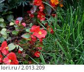 Купить «Цветы», фото № 2013209, снято 18 сентября 2010 г. (c) тб / Фотобанк Лори