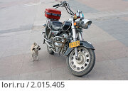 Собачка смотрит на мотоцикл (2010 год). Редакционное фото, фотограф Дмитрий Батталов / Фотобанк Лори