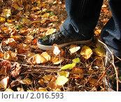 Кеды в осенних листьях. Стоковое фото, фотограф Владимир Вейцель / Фотобанк Лори