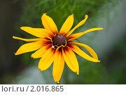 Цветок. Стоковое фото, фотограф Герасимов Вадим Александрович / Фотобанк Лори