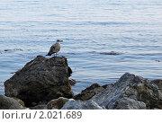 Чайка на камне. Стоковое фото, фотограф Давыдов Юрий / Фотобанк Лори