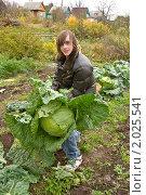 Купить «Дачные хлопоты. Молодой мужчина держит большой кочан капусты.», фото № 2025541, снято 2 октября 2010 г. (c) Александр  Буторин / Фотобанк Лори