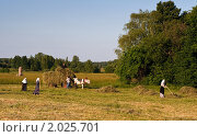 Уборка сена. Стоковое фото, фотограф Максим Блинов / Фотобанк Лори