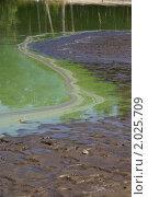Цветение водоема. Стоковое фото, фотограф Александр Фёдоров / Фотобанк Лори