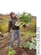 Купить «Дачные хлопоты. Молодой мужчина держит большой кочан капусты.», фото № 2026213, снято 2 октября 2010 г. (c) Александр  Буторин / Фотобанк Лори