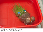 Купить «Травянчик-лягушка в тазу с водой», фото № 2035517, снято 6 октября 2010 г. (c) Сергей Чистяков / Фотобанк Лори