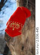 Купить «Красная варежка висит на ветке дерева», фото № 2036445, снято 4 марта 2010 г. (c) Светлана Зарецкая / Фотобанк Лори
