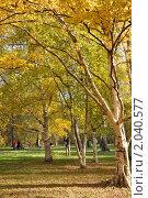 Осень. В московском ботаническом саду. Стоковое фото, фотограф Ольга Крупская / Фотобанк Лори