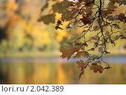 Осенняя романтика. Стоковое фото, фотограф Ольга Зенухина / Фотобанк Лори