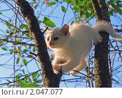 Купить «Белый пушистый котенок пытается слезть с дерева», фото № 2047077, снято 4 июля 2010 г. (c) Светлана Зарецкая / Фотобанк Лори
