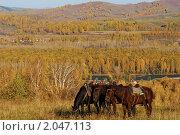 Купить «Три гнедых коня на осеннем пастбище», фото № 2047113, снято 2 октября 2010 г. (c) Дмитрий Ощепков / Фотобанк Лори