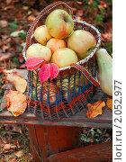 Купить «Осенний натюрморт с яблоками в плетеной корзине», фото № 2052977, снято 10 августа 2010 г. (c) Светлана Зарецкая / Фотобанк Лори