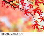 Японский клен. Стоковая иллюстрация, иллюстратор Владимир / Фотобанк Лори