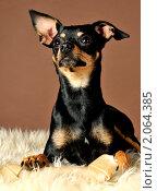 Собака и кость. Стоковое фото, фотограф Евгения Ус / Фотобанк Лори