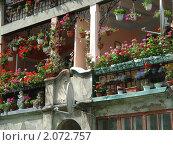 Цветы на летнем балконе. Стоковое фото, фотограф Александр Новиков / Фотобанк Лори