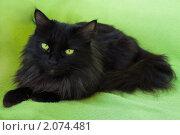Купить «Черная пушистая кошка лежит на зеленом одеяле», фото № 2074481, снято 4 сентября 2010 г. (c) Ольга Гаврилова / Фотобанк Лори