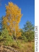 Купить «Осень на лесной опушке», фото № 2077041, снято 24 октября 2010 г. (c) Александр Шилин / Фотобанк Лори