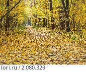 Тропинка в осеннем лесу. Стоковое фото, фотограф Косторная Наталья / Фотобанк Лори