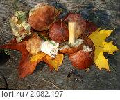 Урожай. Стоковое фото, фотограф Никонович Светлана / Фотобанк Лори