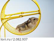Купить «Из серии:домашние животные», фото № 2082937, снято 26 октября 2010 г. (c) Максим Коломыченко / Фотобанк Лори