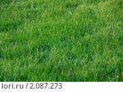 Подстриженный газон. Стоковое фото, фотограф Абушкина Мария / Фотобанк Лори