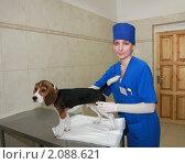 Купить «Женщина ветеринар со щенком породы бигль», фото № 2088621, снято 27 мая 2009 г. (c) Галина Бурцева / Фотобанк Лори